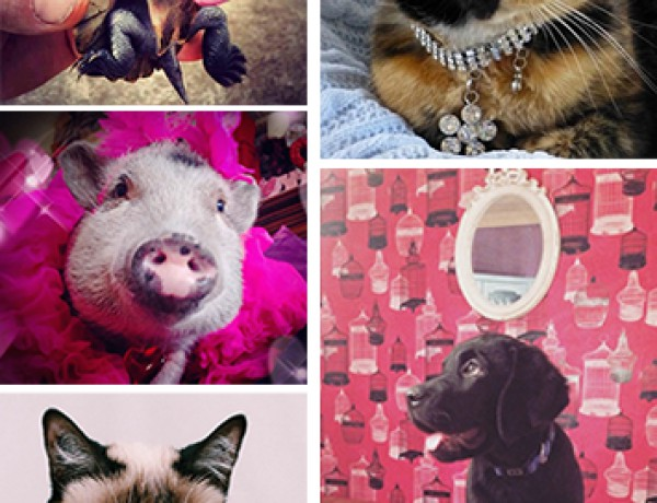 Pets collage