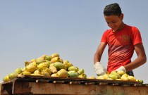 "Humans of Prickly Pears in Cairo, ""we all go through good days and bad days"""
