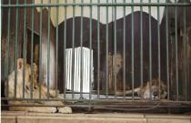 Animal's Hell on Earth; Giza Zoo!